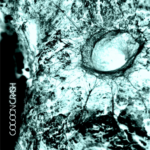 Cocoon Single Cover 2